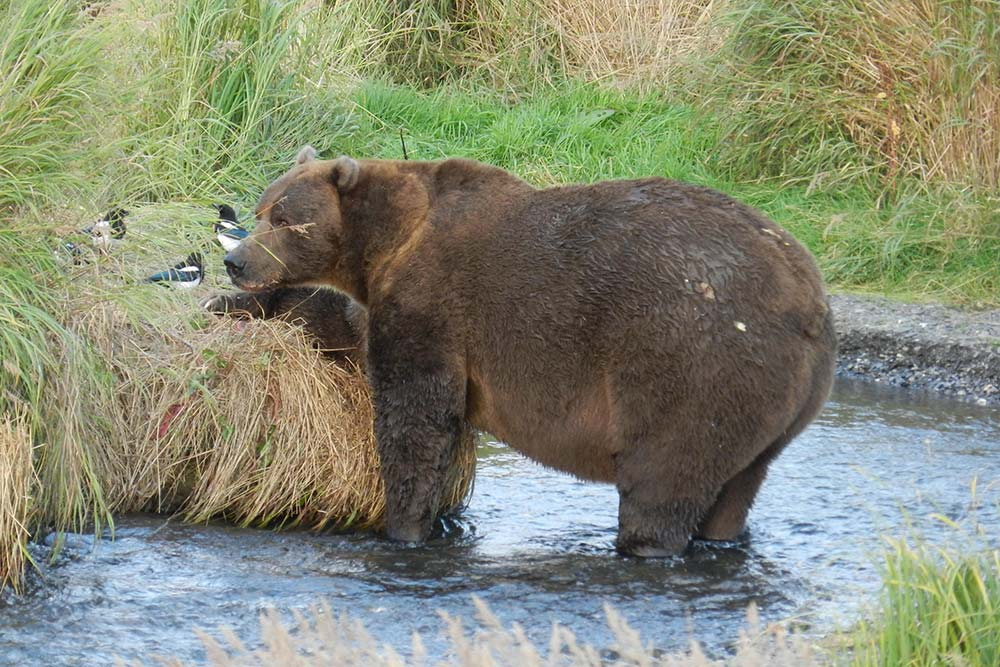 anchorage hotel attractions puffin inn Alaska Wildlife Conservation Center