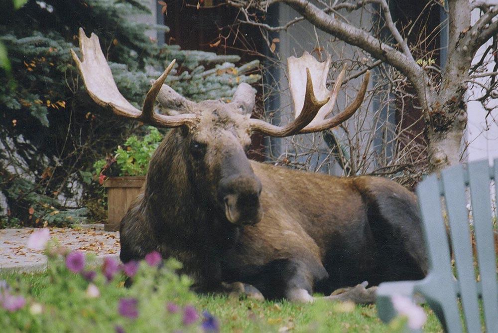 The Alaska Zoo: Attractions, Puffin Inn