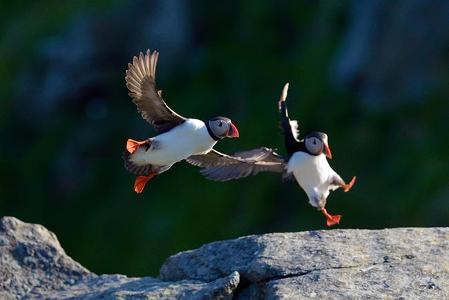 Hotel Specials, book early and save! Anchorage hotel Puffin Inn
