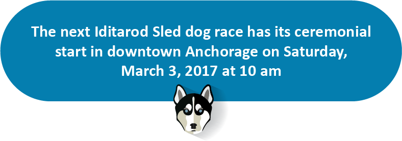 sled dog race - puffin inn blog